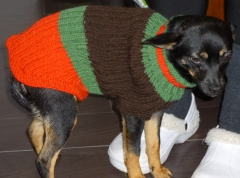 tricot,chien,pull